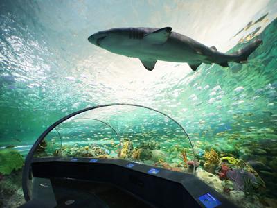 Ripley's Aquarium of Canada now open!