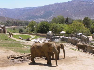 GETAWAY: San Diego Zoo