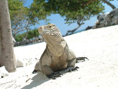 GETAWAY: Little Cayman