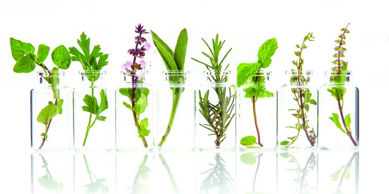 The Healing Power of Essential Oils