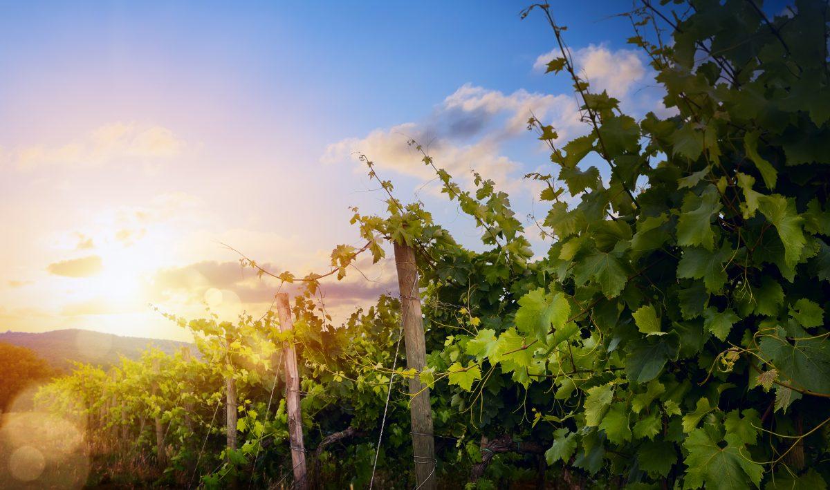 ABCs OF Italian Wine
