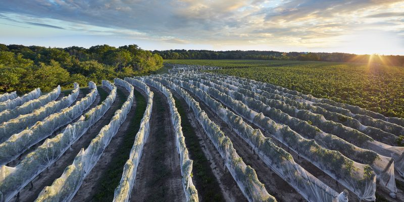 Comeback complete – One of Ontario's most beloved wine projects is back from the dead