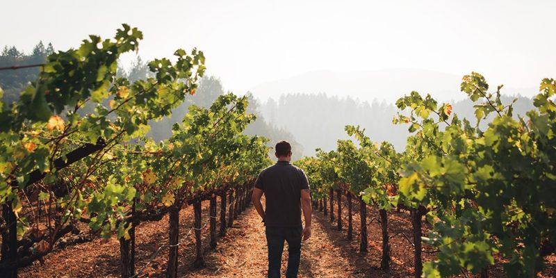 West Wines: kings of California